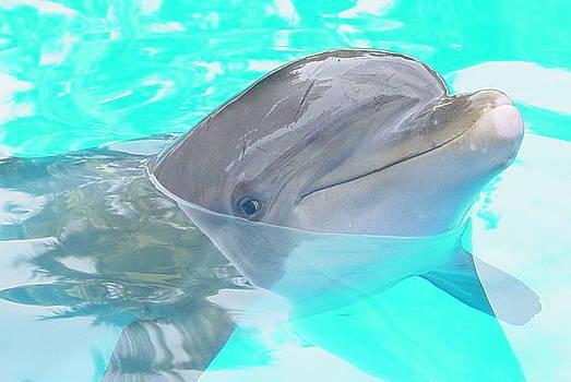 Dolphin by Robert Bartlett