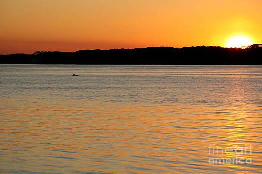 Danielle Groenen - Dolphin Sunset