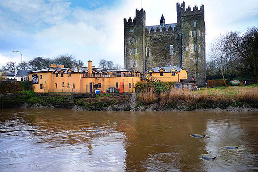 Dominick Moloney - Dolphins Bunratty Castle Co Clare Ireland