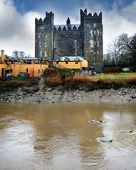 Dominick Moloney - Dolphins th Bunratty Castle Co Clare Munster  Ireland
