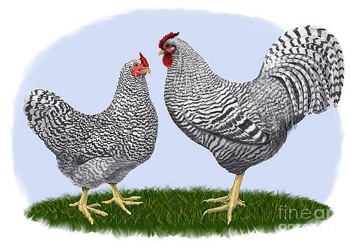 Dominique Rooster and Hen by Leigh Schilling