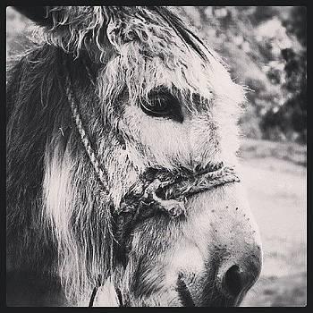 Donkey  by Katalina Fuentes