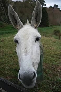 Donkey by Jocelyn Friis