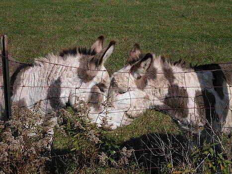 Donkey Love by Erica  Darknell