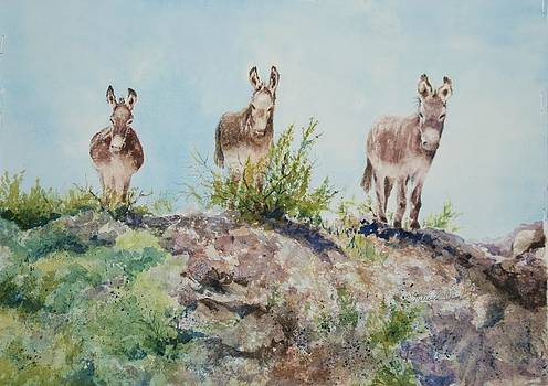 Donkeys by Marilyn  Clement
