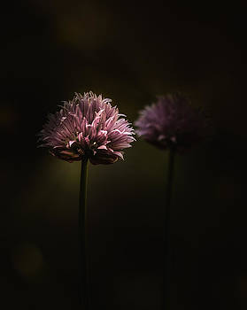 Don't Go by Paul Barson