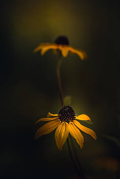 Don't Leave Me Behind by Paul Barson