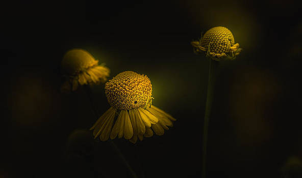 Don't Say Goodbye by Paul Barson