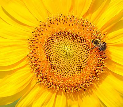 Don't Worry Bee Happy by Amanda Lomonaco