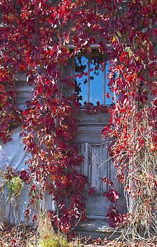 Door and vines by Allan MacDonald