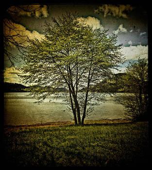 Thom Zehrfeld - The Tree At Dorena Lake