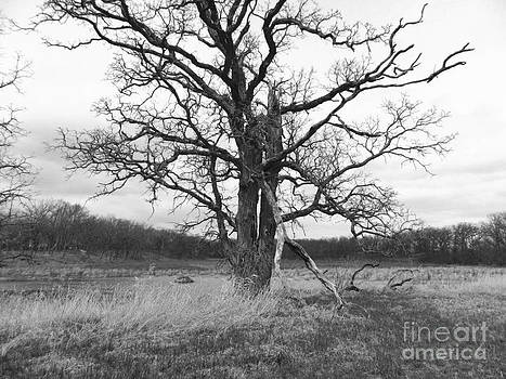 Dormant Beauty BW by Catherine Hill