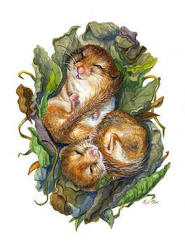 Dormouse Hibernation by Insil Choi