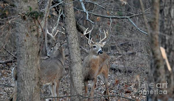 Double Bucks by Maureen Cavanaugh Berry