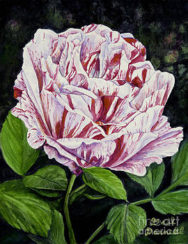 Double Delight Rose by Gail Darnell