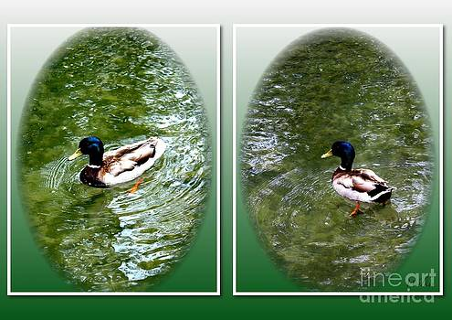 Double Duck by Schnina Walker