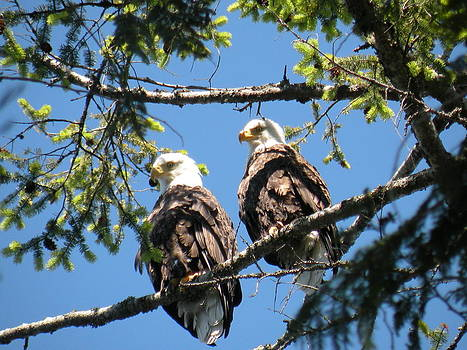 Double Eagles by Wendy Brunell