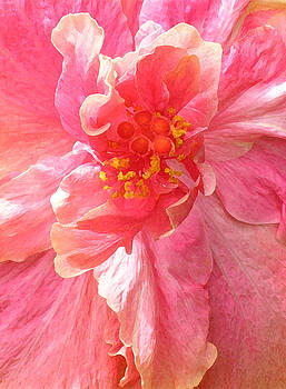 James Temple - Double Pink Hibiscus