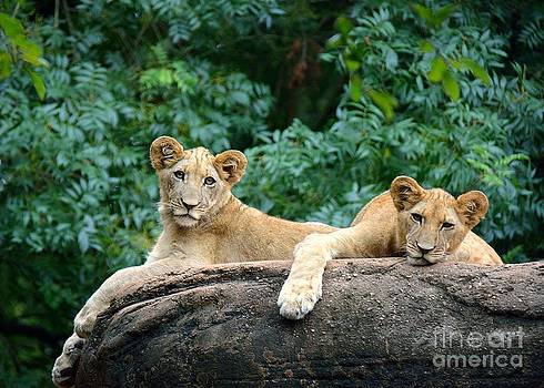 Double Trouble by Lisa L Silva
