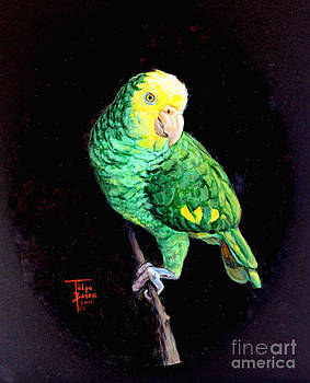 Art By - Ti   Tolpo Bader - Double Yellow Headed Amazon Paco