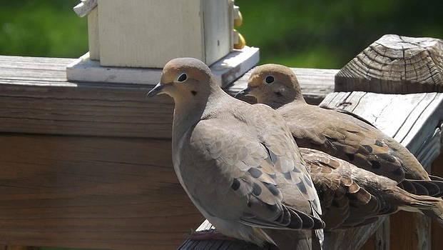 Dove Family by Michael Sokalski