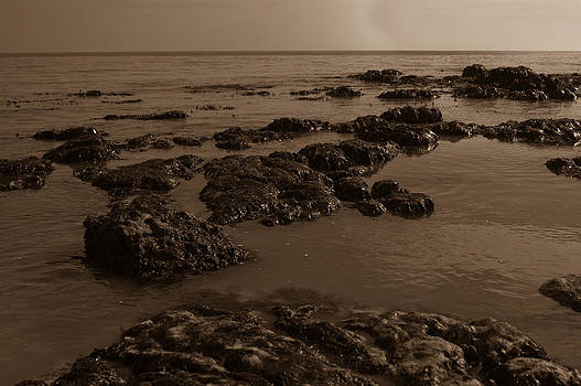 Dover sepia by Peter Nix
