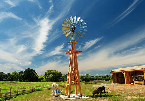 Down on the Farm by Elaine Franklin