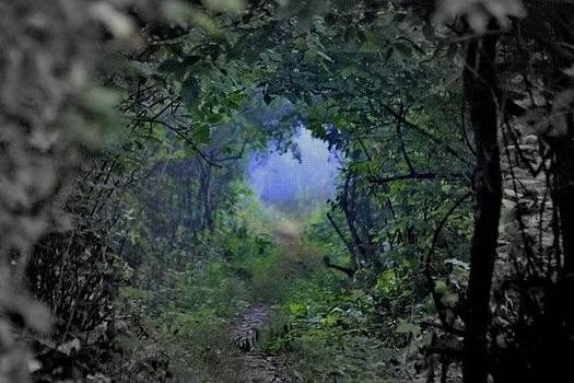 Down The Hobbit Trail by Ed Nicholles