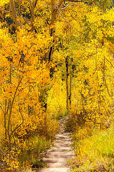 The road less traveled  by Randy Giesbrecht