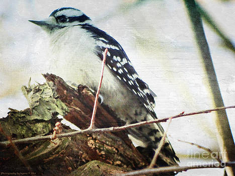 Gena Weiser - Downy Woodpecker