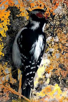 Mike Breau - Downy Woodpecker