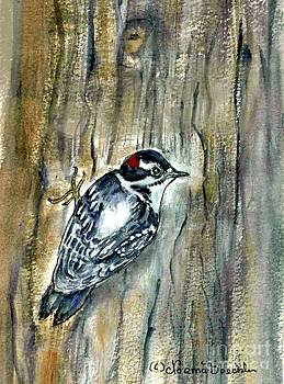 Downy Woodpecker by Norma Boeckler