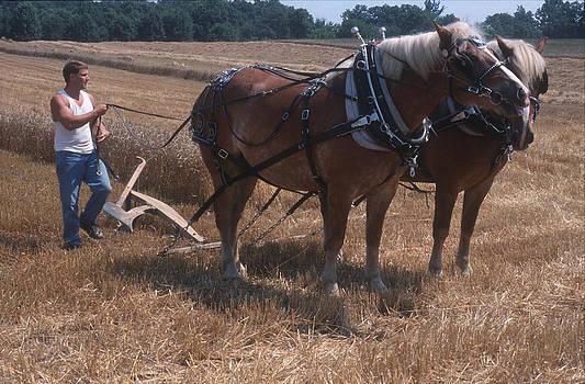 Harold E McCray - Draft Horses