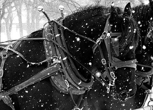 Draft Horses in the Snow by Megan Luschen