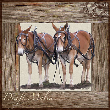 Draft Mules by Bethany Caskey