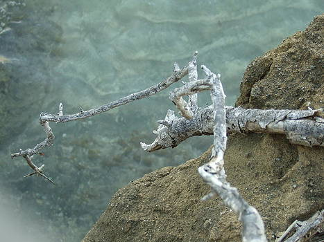 Dragon Branch by Katerina Naumenko