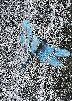 Dragon Fly by De Beall