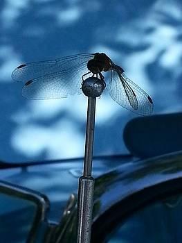 Dragon Fly by Kelli Uysaloglu