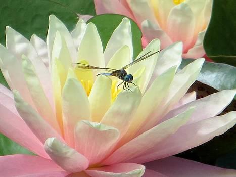 Dragon Lily by Carli Tolmie