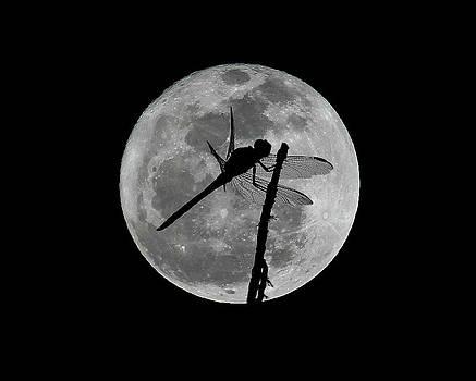 Erin Tucker - Dragon Moon