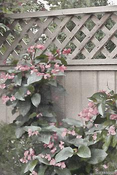 Sandra Foster - Dragon Wing Begonias Digital Oil Painting
