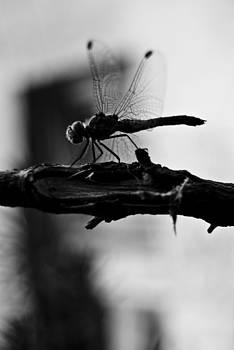 Dragonfly 03 by Grebo Gray