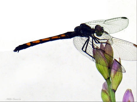 Dragonfly 2 by Mikki Cucuzzo