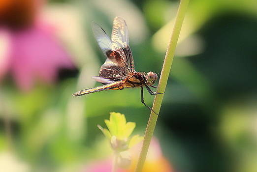 Rosanne Jordan - Dragonfly Art