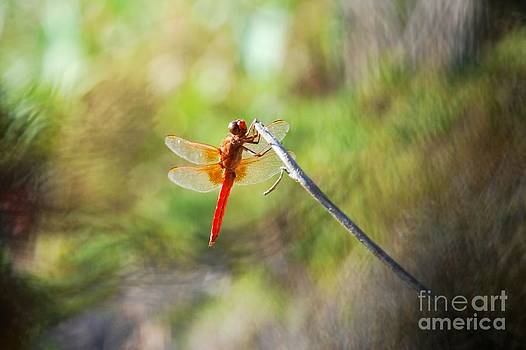 Dragonfly  by Claudia Ellis