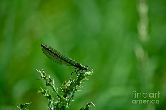 Dragonfly during Attenborough Walk by KamGeek Photography
