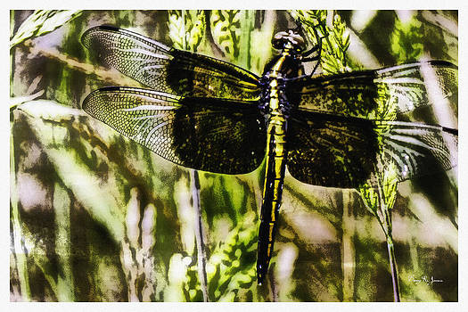 Barry Jones - Dragonfly Essence