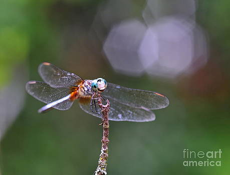 Wayne Nielsen - Dragonfly Eyes Intruder