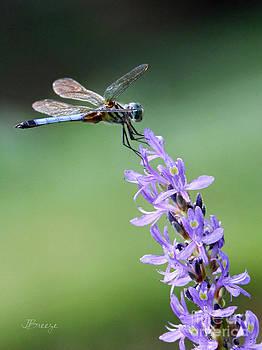 Dragonfly Haze..NZ by Jennie Breeze
