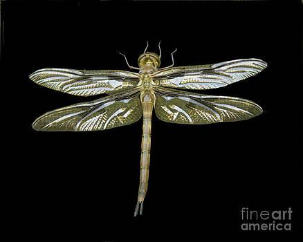 Dragonfly I by Carol McCutcheon